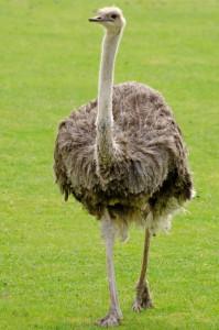 emu-165079