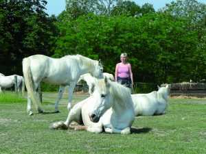 Mit-Pferden-Sein