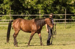 Pferd & Ausbildung
