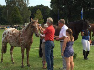 (c)pro agro_Das zweitschoenste und drittschoenste Pferd