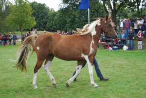 Das natürlich schönste Pony & Pferd Brandenburg-Berlins 2017 gesucht